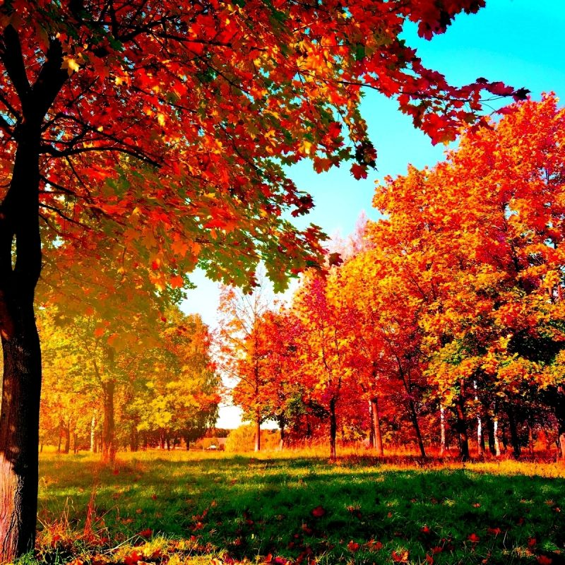 10 Most Popular Fall Wallpapers For Desktop FULL HD 1080p For PC Desktop 2018 free download autumn trees wide desktop background wallpaper wiki 1 800x800
