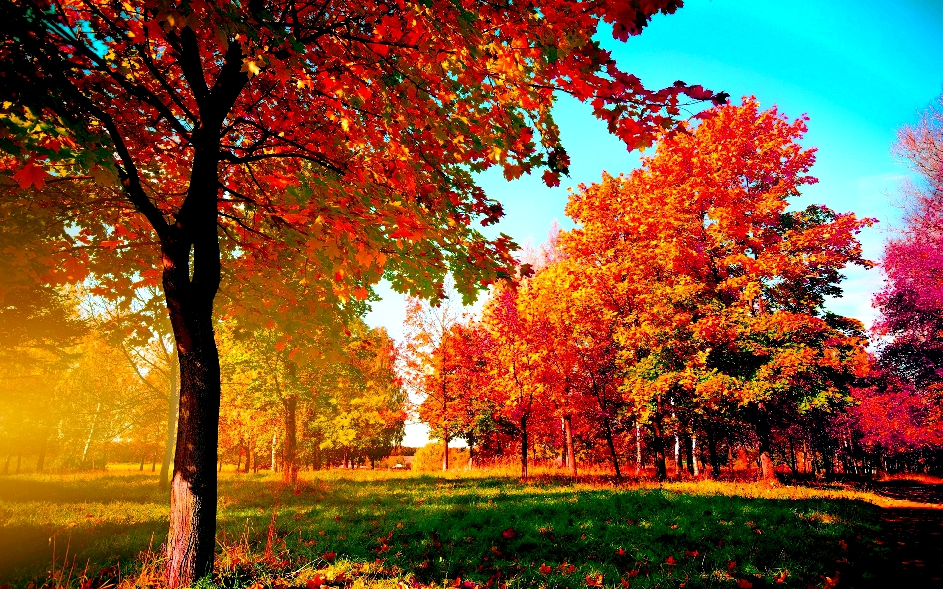 autumn-trees wide desktop background - wallpaper.wiki