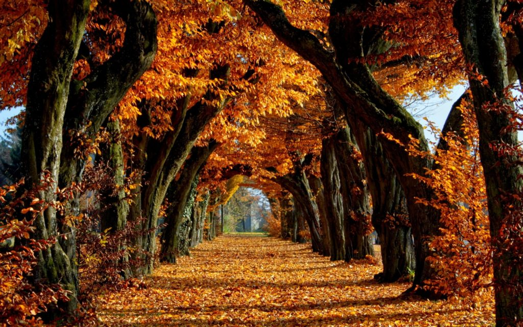 10 Best High Definition Autumn Wallpaper FULL HD 1080p For PC Background 2020 free download autumn wallpaper 13842 2560x1600 px hdwallsource 1024x640