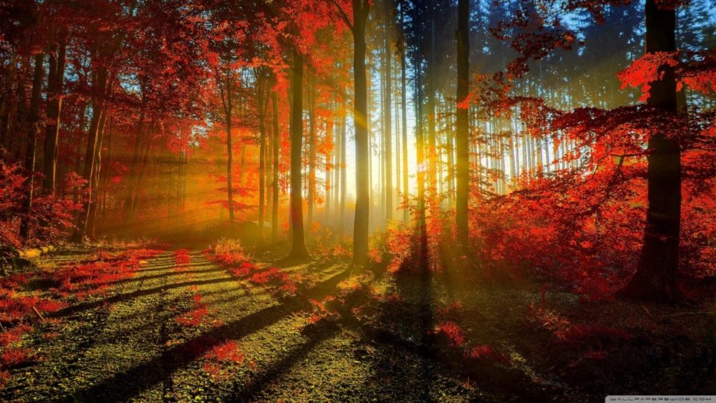 10 Best High Definition Autumn Wallpaper FULL HD 1080p For PC Background 2020 free download autumn wallpaper hd 1080p 13 4k hd desktop wallpapers for ultra 1024x576
