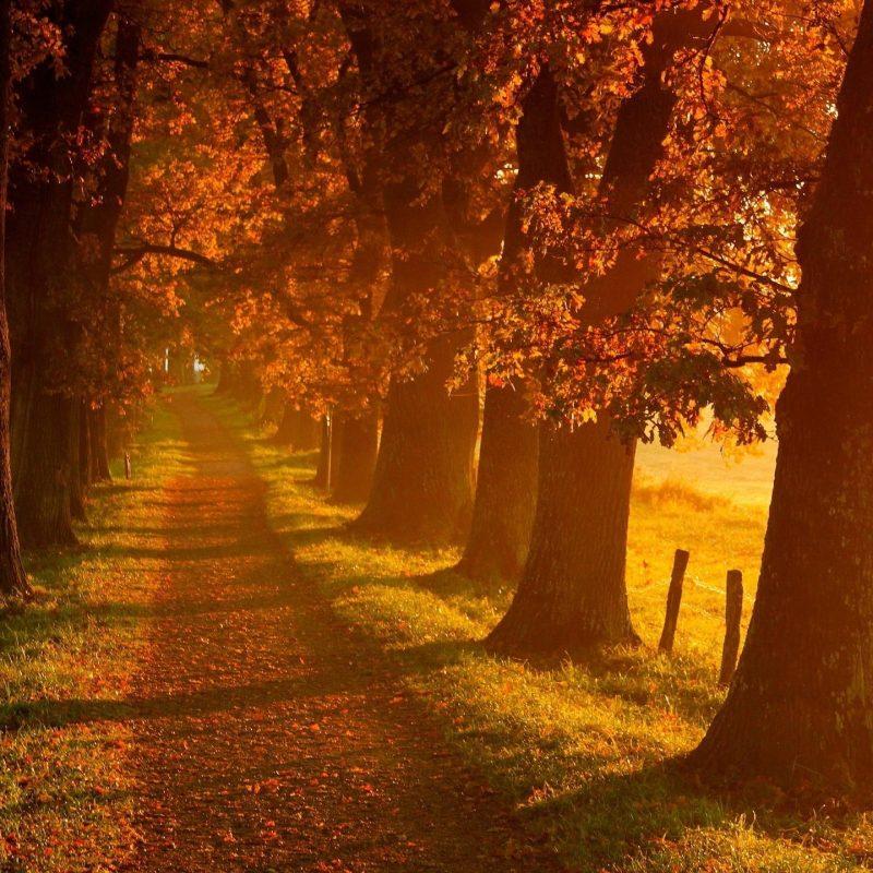 10 New Autumn Landscape Wallpaper Hd FULL HD 1080p For PC Background 2018 free download autumn wallpaper hd 2017 3 media file pixelstalk 800x800