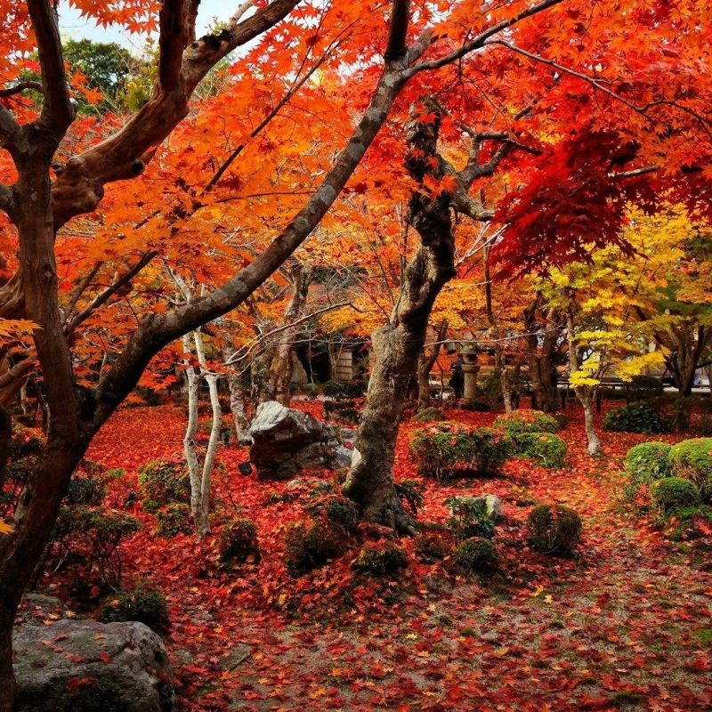 10 Most Popular Autumn Hd Wallpapers 1080P FULL HD 1080p For PC Desktop 2020 free download autumn wallpapers 1920x1080 wallpaper cave 1 800x800