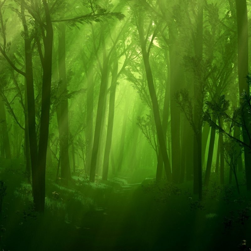 10 Most Popular Dark Green Forest Wallpaper FULL HD 1080p For PC Background 2018 free download awesome dark forest wallpaper 35743 1920x1080 px hdwallsource 800x800