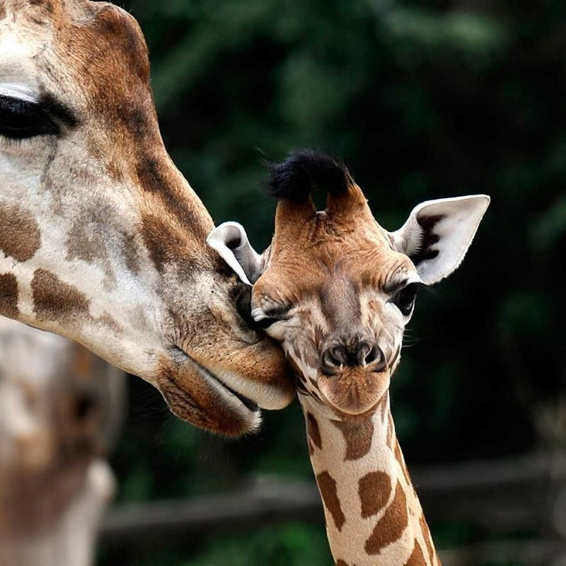 10 New Baby Animals Wallpaper Hd FULL HD 1920×1080 For PC Desktop 2018 free download baby animals wallpaper hd pics animal images one for smartphone cute 800x800