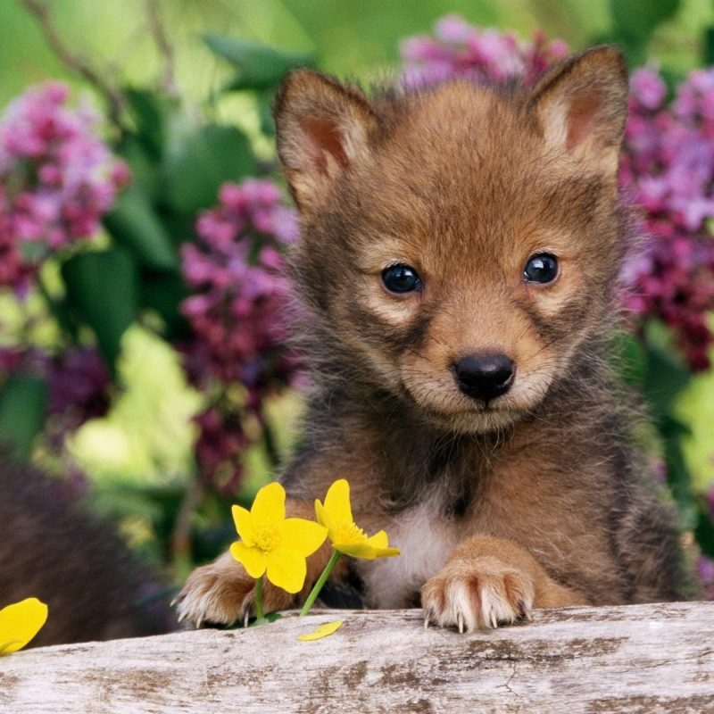 10 New Wallpapers Of Baby Animals FULL HD 1920×1080 For PC Desktop 2018 free download baby animals wallpapers for free download about 935 wallpapers 800x800