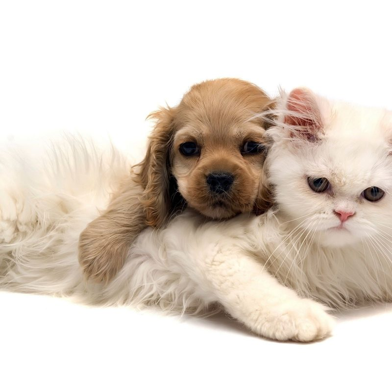 10 Most Popular Cat And Dog Wallpaper FULL HD 1080p For PC Background 2018 free download baby cats and dogs pics wallpaper big house pinterest dog cat 800x800