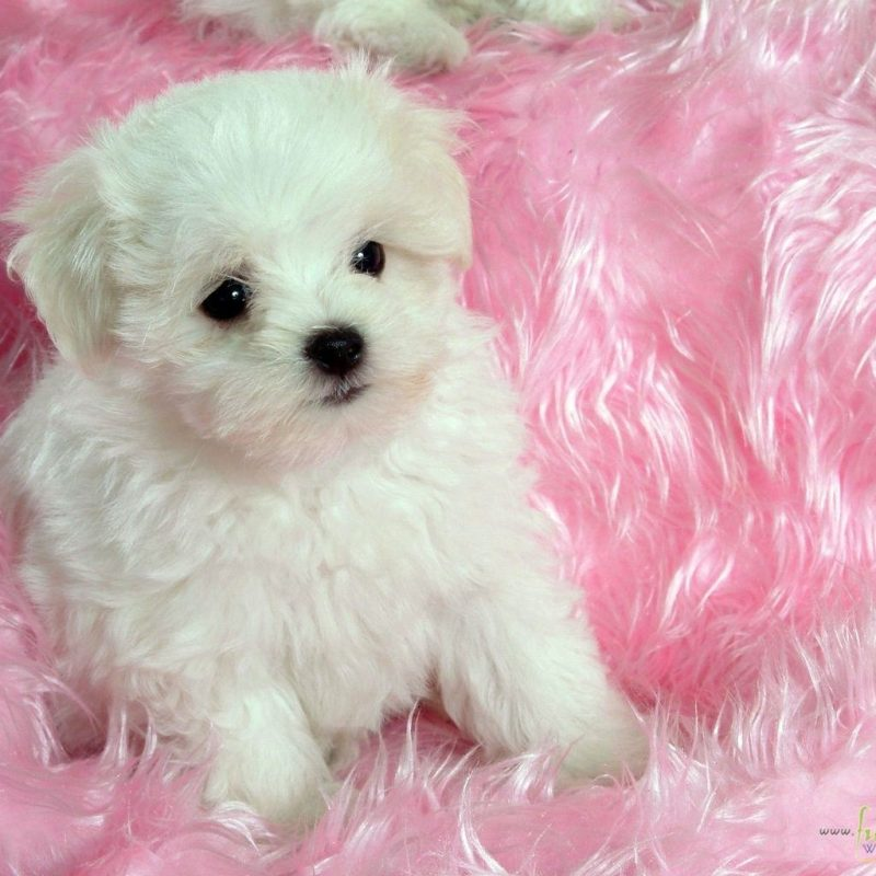 10 New Cute Baby Dogs Wallpaper FULL HD 1920×1080 For PC Desktop 2018 free download baby dog wallpaper for android i54 awesomeness pinterest dog 1 800x800