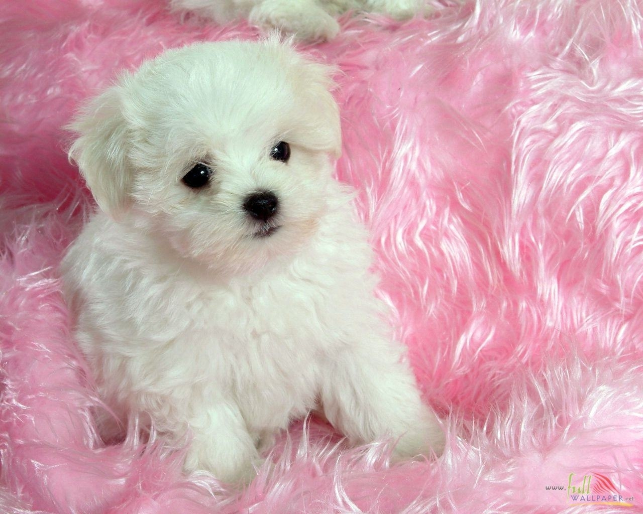 baby dog wallpaper for android #i54   awesomeness   pinterest   dog
