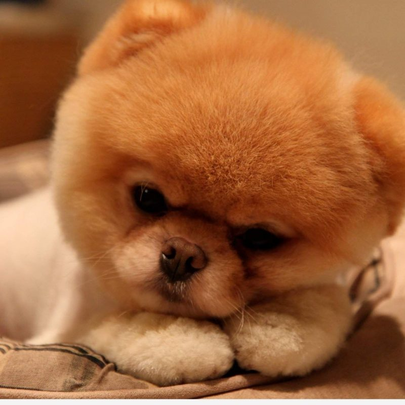 10 Most Popular Images Of Baby Dogs FULL HD 1080p For PC Background 2018 free download baby dog wallpaper hd resolution tuv awesomeness pinterest 800x800