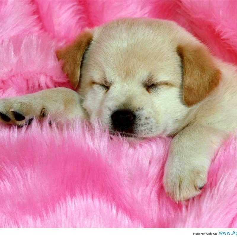 10 Most Popular Images Of Baby Dogs FULL HD 1080p For PC Background 2018 free download baby dog wallpapers wallpaper cave 800x800