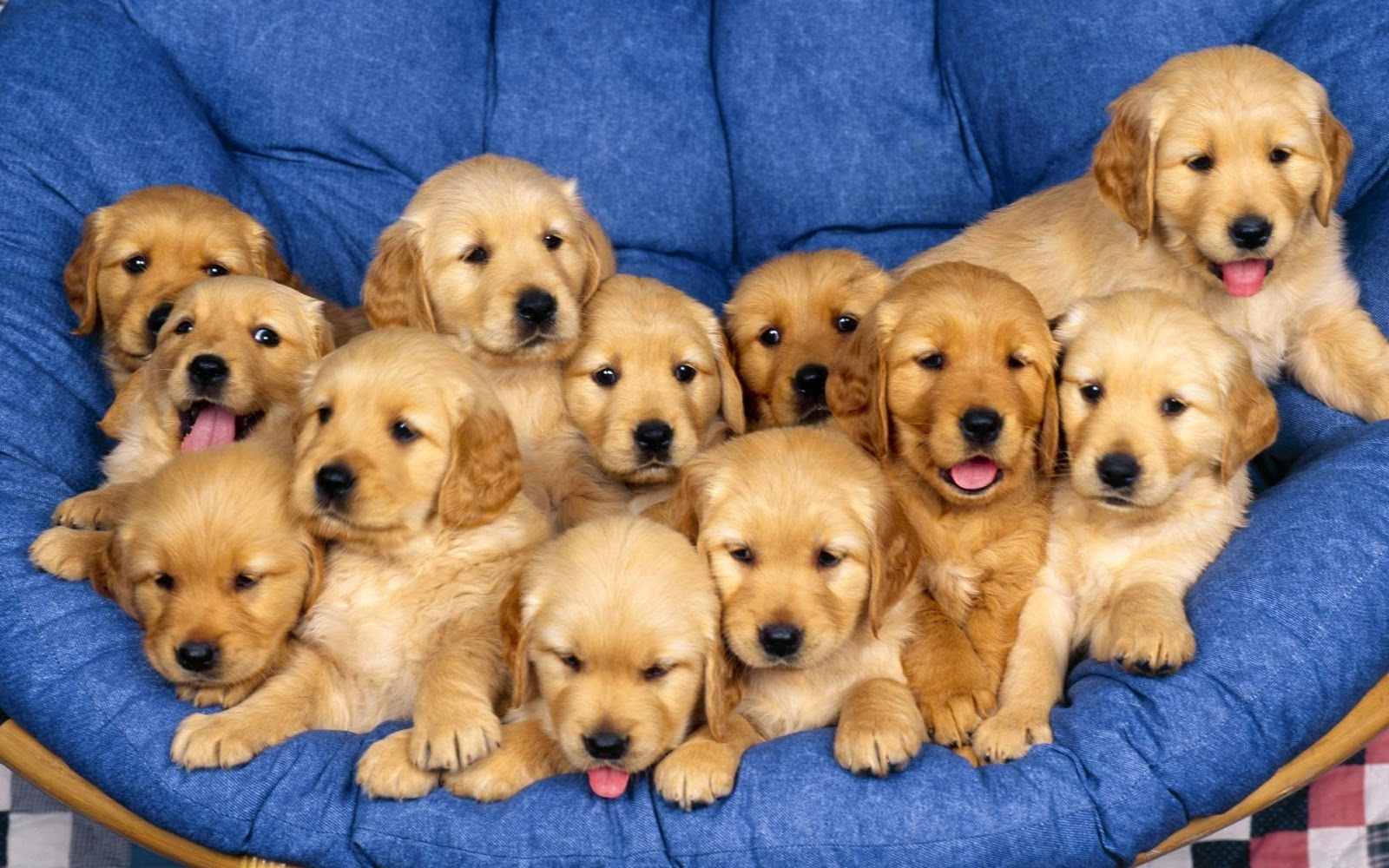 baby dogs pictures download
