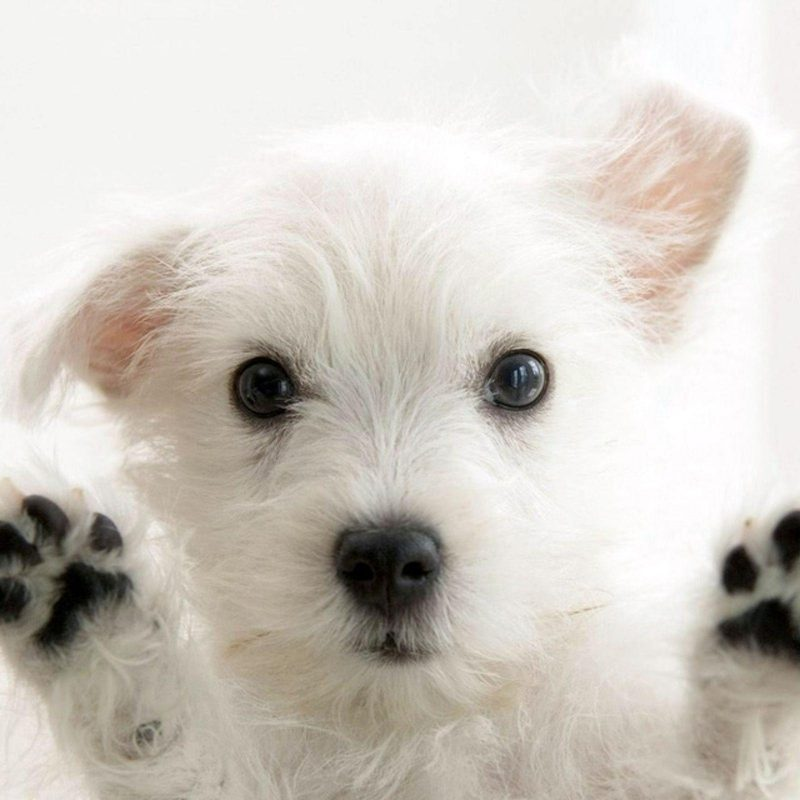 10 New Cute Baby Dogs Wallpaper FULL HD 1920×1080 For PC Desktop 2018 free download baby dogs wallpapers wallpaper cave 800x800