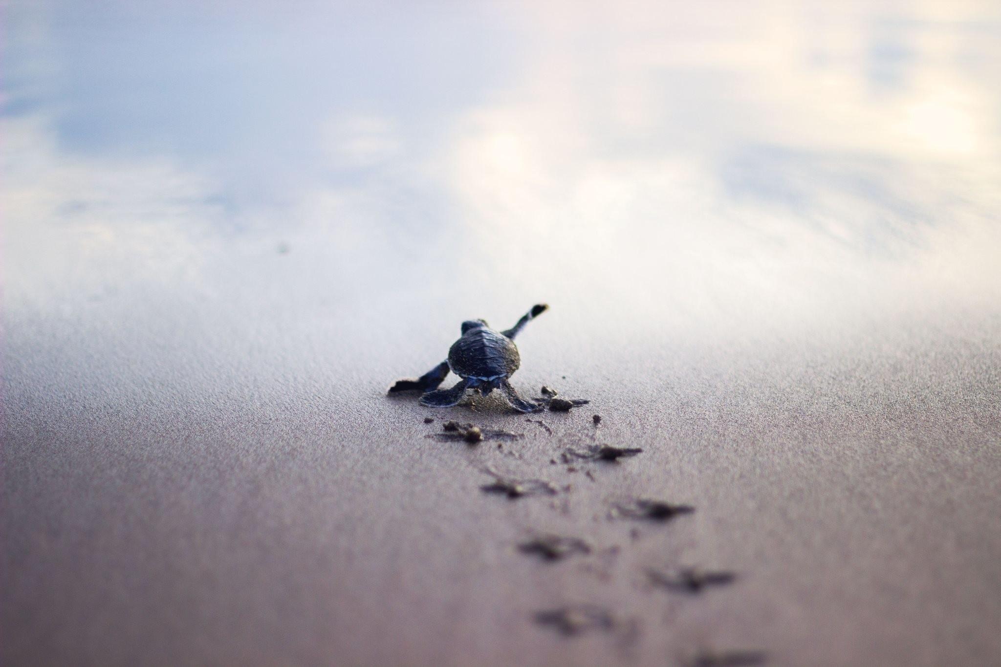 baby turtle wallpaper (54+ images)