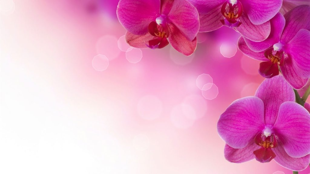 10 Most Popular Flower Wallpapers And Backgrounds FULL HD 1080p For PC Background 2018 free download background flowers wallpaper 1024x576