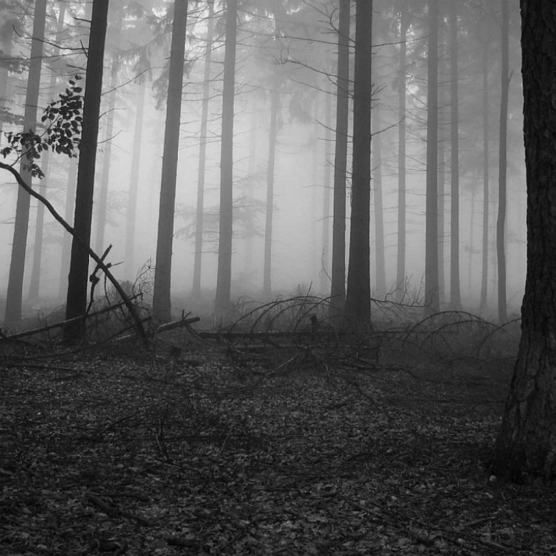 10 Best Black And White Forest Background FULL HD 1080p For PC Background 2018 free download backgrounds for wallpaperwiki black and white forest wallpaper hd 1 800x800