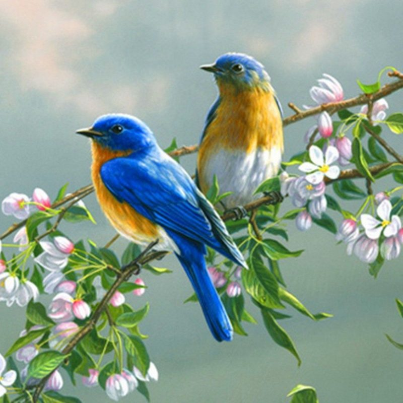 10 Most Popular Birds Full Hd Wallpapers FULL HD 1920×1080 For PC Desktop 2018 free download backgrounds love birds cave with nature wallpaper hd high resolution 800x800