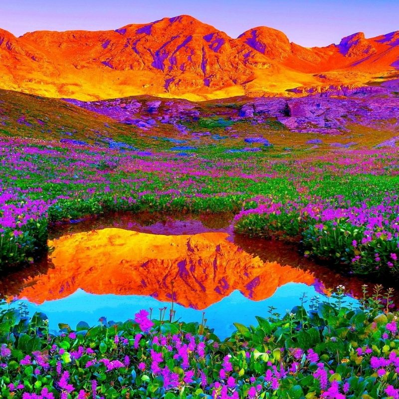 10 Top Colorful Nature Wallpaper Hd FULL HD 1920×1080 For PC Background 2021 free download backgrounds nature hd background image images new with wallpaper 800x800