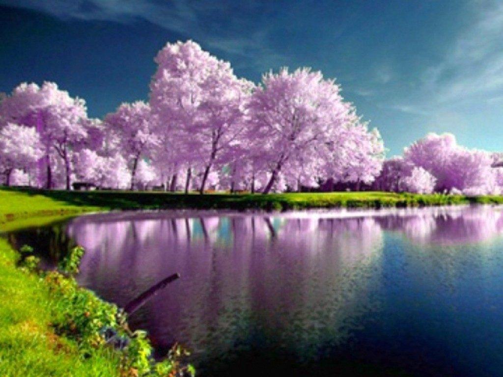 10 Most Popular Spring Nature Desktop Wallpaper FULL HD 1080p For PC Desktop 2018 free download backgrounds spring nature high resolution with desktop wallpaper 1024x768