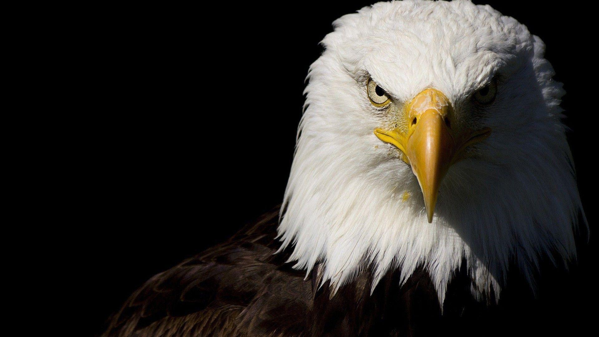 bald eagle 1920x1080 | animals | eagle wallpaper, eagle, eagle images