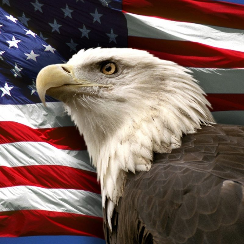 10 Top Eagle And Flag Wallpaper FULL HD 1080p For PC Desktop 2018 free download bald eagle flag pictures wallpaper 800x800