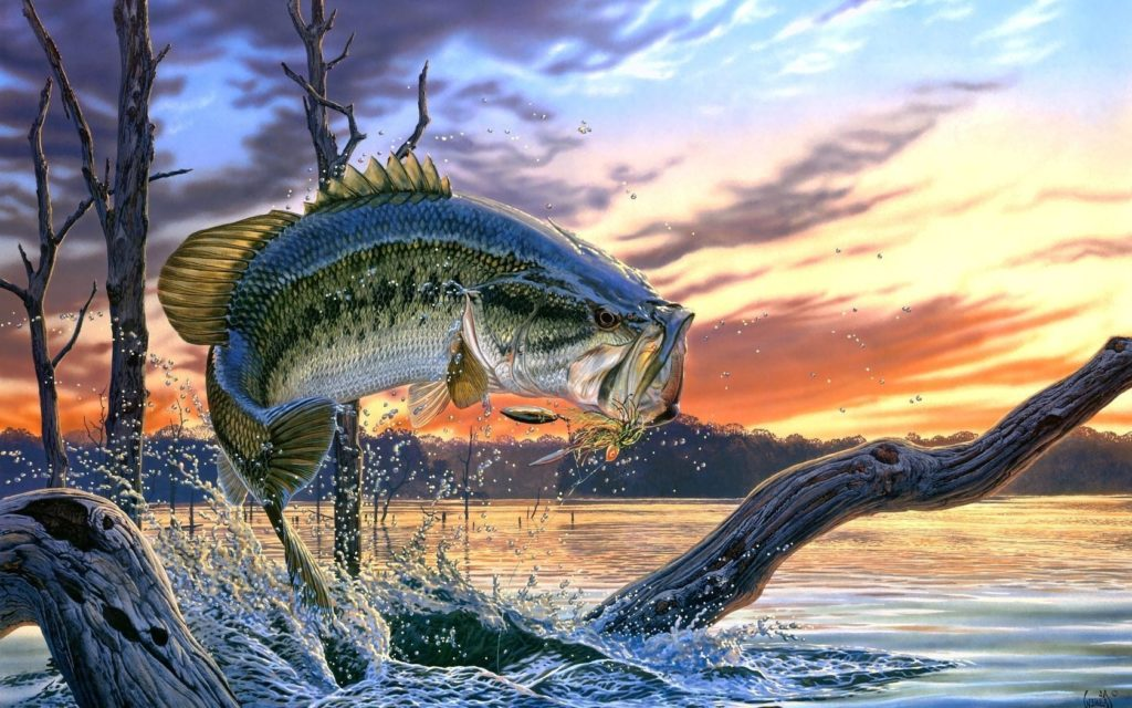 10 Latest Fishing Backgrounds For Iphone FULL HD 1080p For PC Background 2018 free download bass fishing backgrounds group with 63 items 1024x640