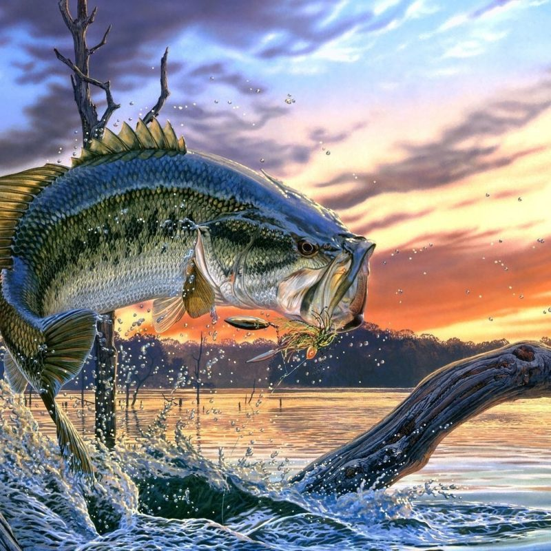10 Best Bass Fishing Screen Saver FULL HD 1080p For PC Background 2020 free download bass fishing bass fishing wallpaper backgrounds wallpaper cave 800x800