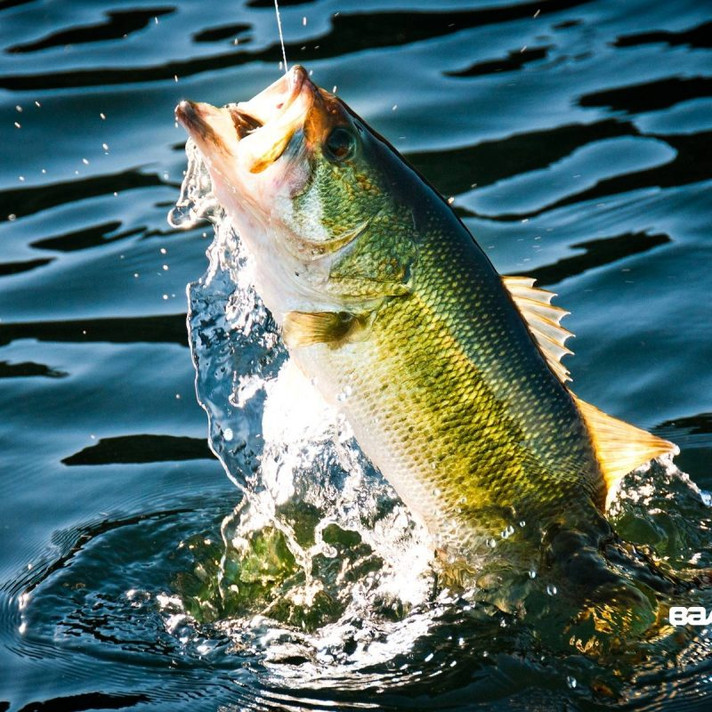 10 Best Bass Fishing Screen Saver FULL HD 1080p For PC Background 2020 free download bass fishing wallpaper backgrounds wallpaper cave 800x800