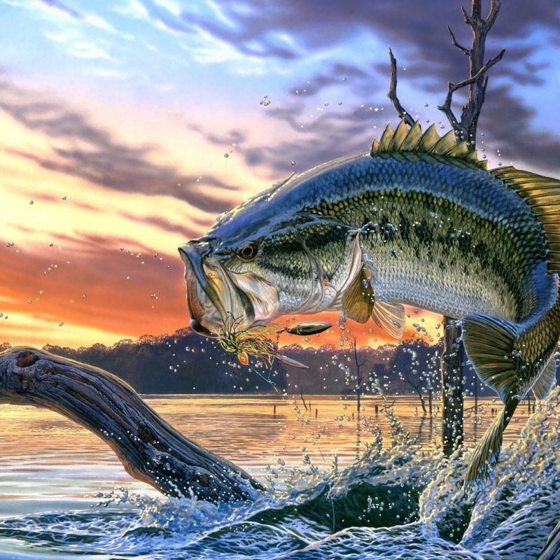 10 Best Bass Fishing Screen Saver FULL HD 1080p For PC Background 2020 free download bass images of fish largemouth bass fishing wallpaper background 800x800