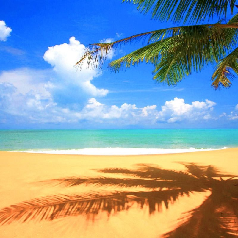 10 Top Beach Palm Tree Background FULL HD 1920×1080 For PC Background 2018 free download beach palm tree background hd wallpapers pulse 800x800