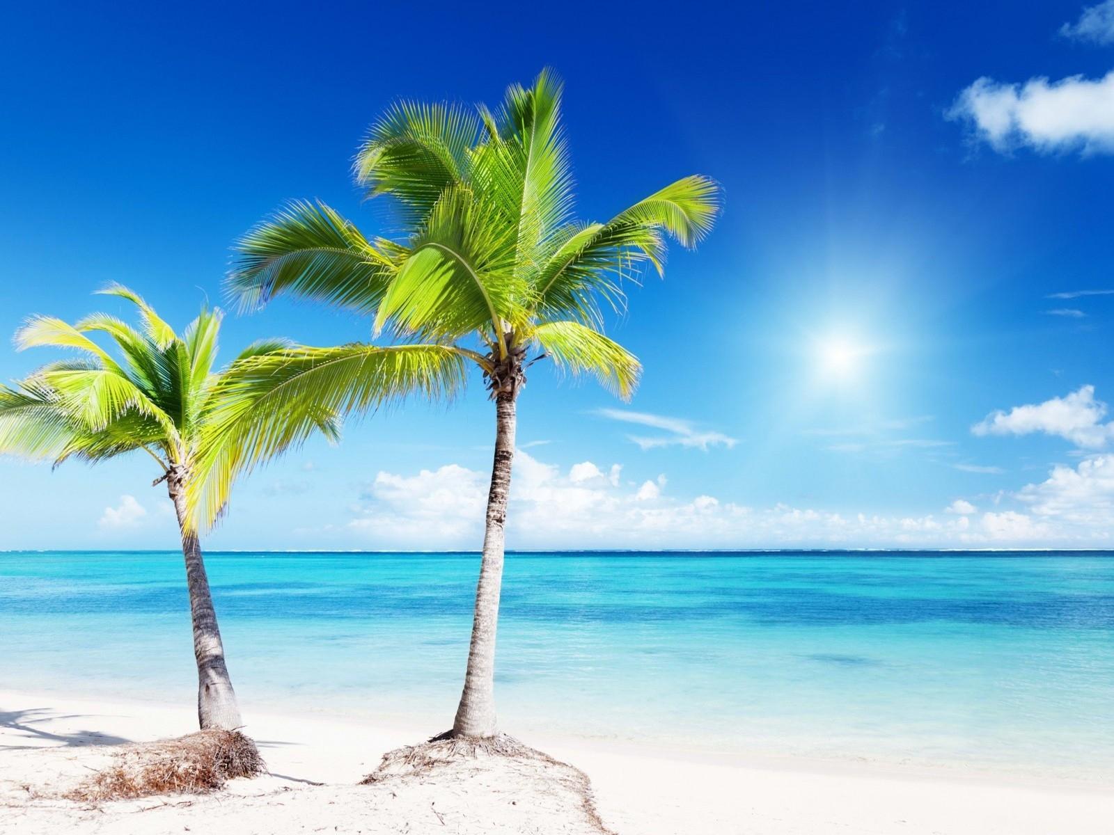 beach: palm trees two beach sea tropical iphone wallpaper tumblr