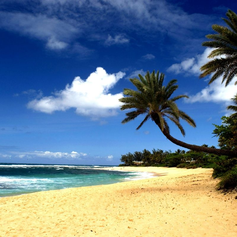 10 Latest Pics Of Hawaiian Beaches FULL HD 1080p For PC Desktop 2018 free download beach sand 800x800