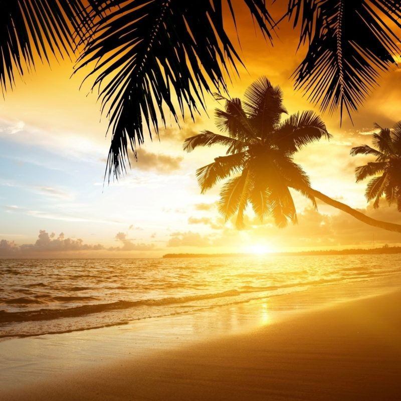 10 Latest Summer Beach Sunset Wallpaper FULL HD 1920×1080 For PC Desktop 2020 free download beaches beach tropical summer sea palm sand coast nature paradise 800x800