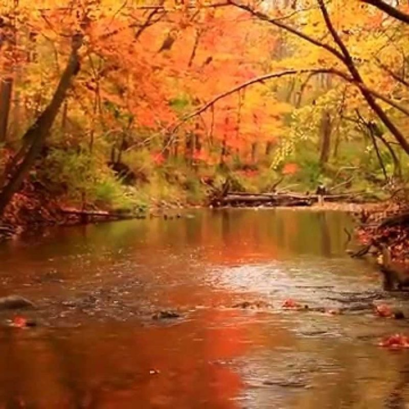 10 Best Beautiful Fall Scenery Images FULL HD 1080p For PC Desktop 2018 free download beautiful and colorful autumn scenery youtube 800x800