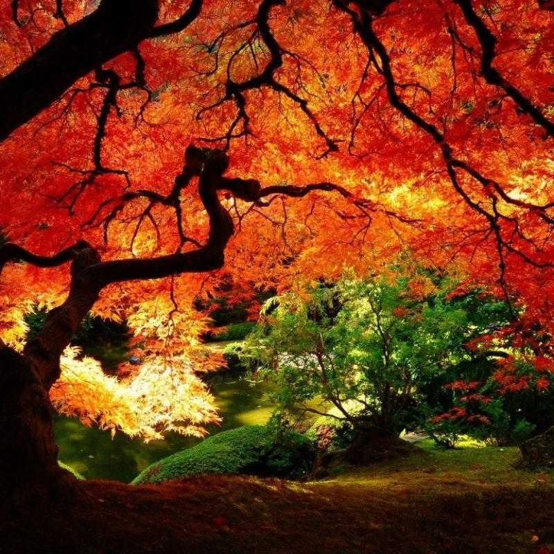 10 New Beautiful Autumn Wallpapers Desktop FULL HD 1920×1080 For PC Background 2018 free download beautiful autumn e29da4 4k hd desktop wallpaper for e280a2 dual monitor 3 800x800