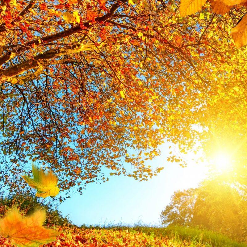 10 New Autumn Landscape Wallpaper Hd FULL HD 1080p For PC Background 2018 free download beautiful autumn landscape e29da4 4k hd desktop wallpaper for 4k ultra 800x800