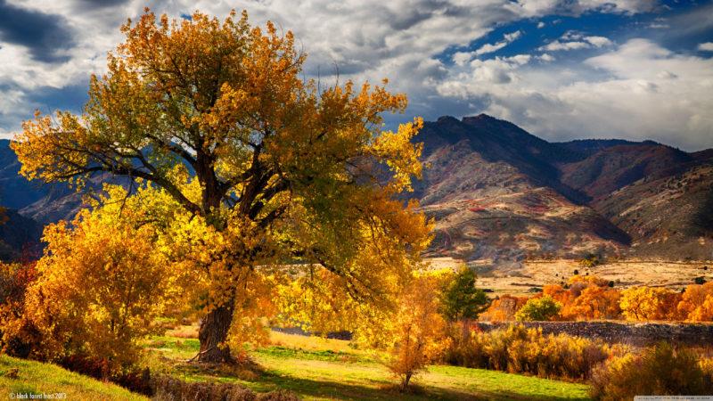 10 New Autumn Scenes Wallpaper FULL HD 1080p For PC Background 2018 free download beautiful autumn scenery colorado e29da4 4k hd desktop wallpaper for 4k 800x450
