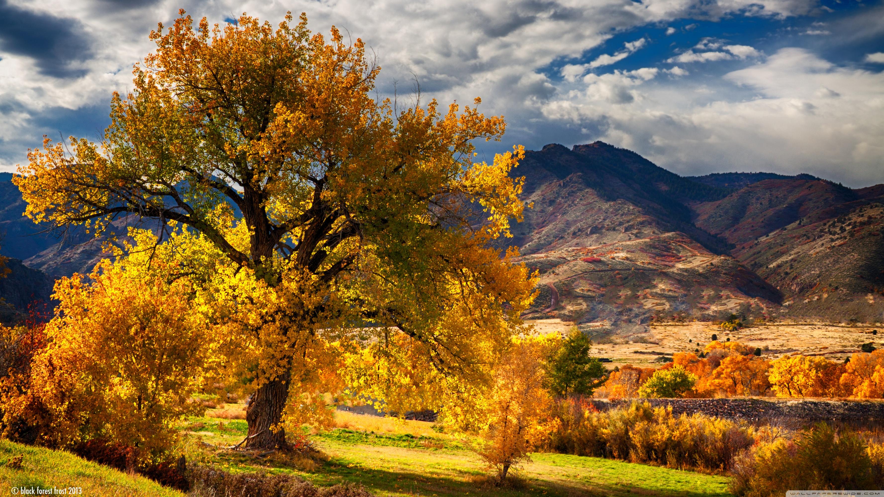 beautiful autumn scenery colorado ❤ 4k hd desktop wallpaper for 4k