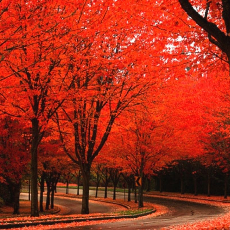 10 New Beautiful Autumn Wallpapers Desktop FULL HD 1920×1080 For PC Background 2018 free download beautiful autumn wallpapers 2 seasonal crazy frankenstein 1 800x800