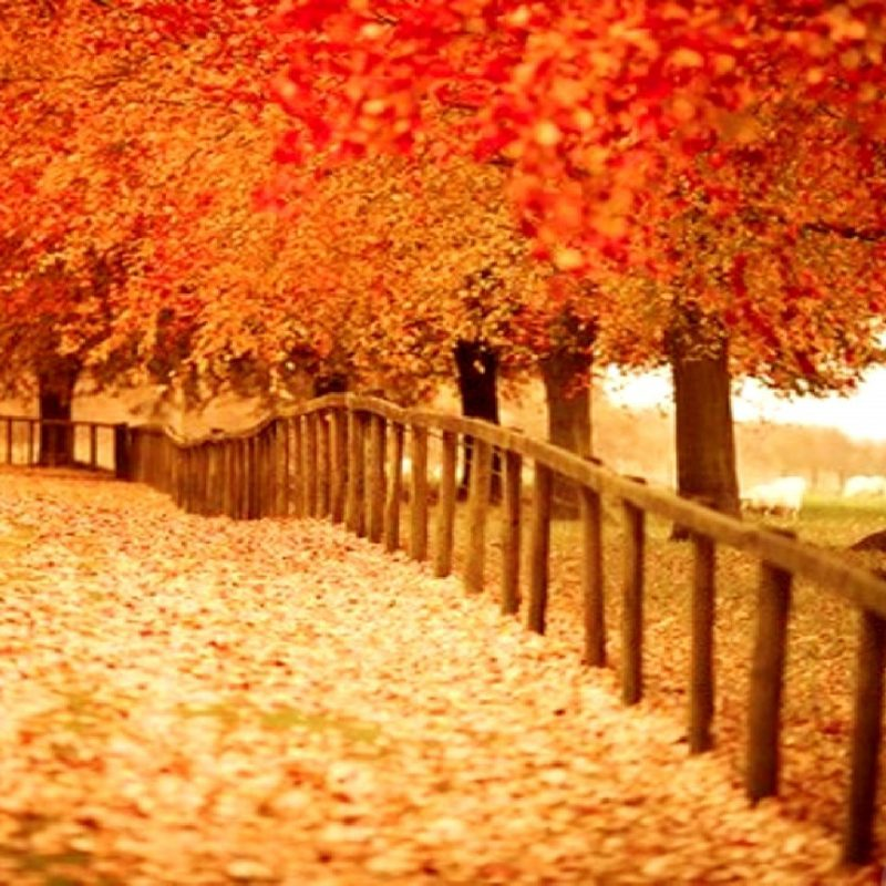 10 Best Beautiful Fall Pictures Wallpaper FULL HD 1080p For PC Desktop 2020 free download beautiful autumn wallpapers 2 seasonal crazy frankenstein 800x800