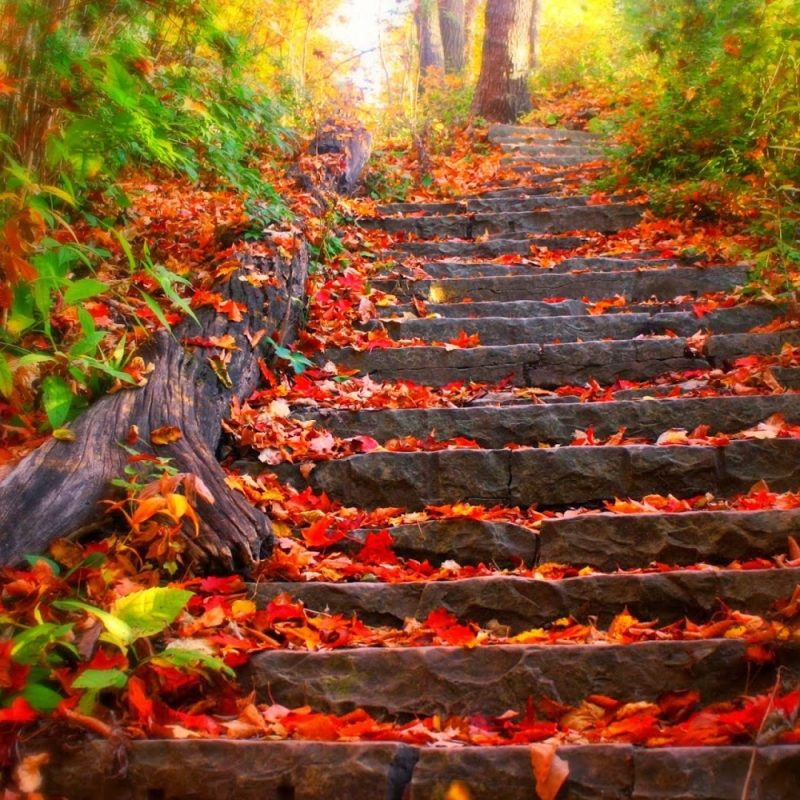 10 New Beautiful Autumn Wallpapers Desktop FULL HD 1920×1080 For PC Background 2018 free download beautiful autumn wallpapers most beautiful places in the world 800x800