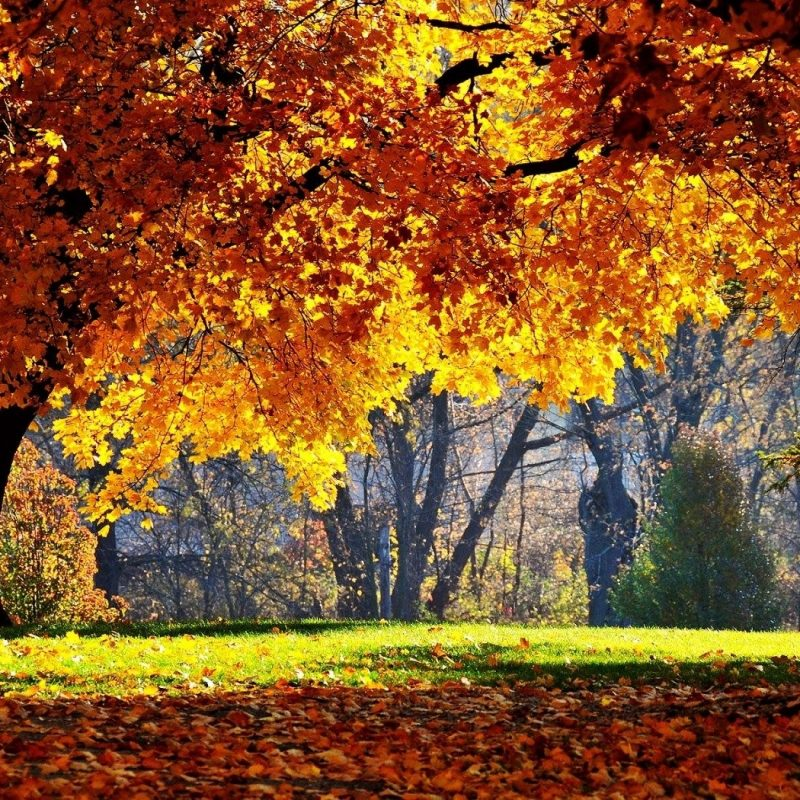 10 New Beautiful Autumn Wallpapers Desktop FULL HD 1920×1080 For PC Background 2018 free download beautiful autumn wallpapers ololoshenka pinterest autumn 800x800
