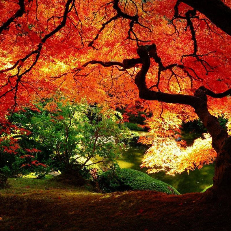 10 New Beautiful Autumn Wallpapers Desktop FULL HD 1920×1080 For PC Background 2018 free download beautiful autumn wallpapers wallpaper cave 800x800