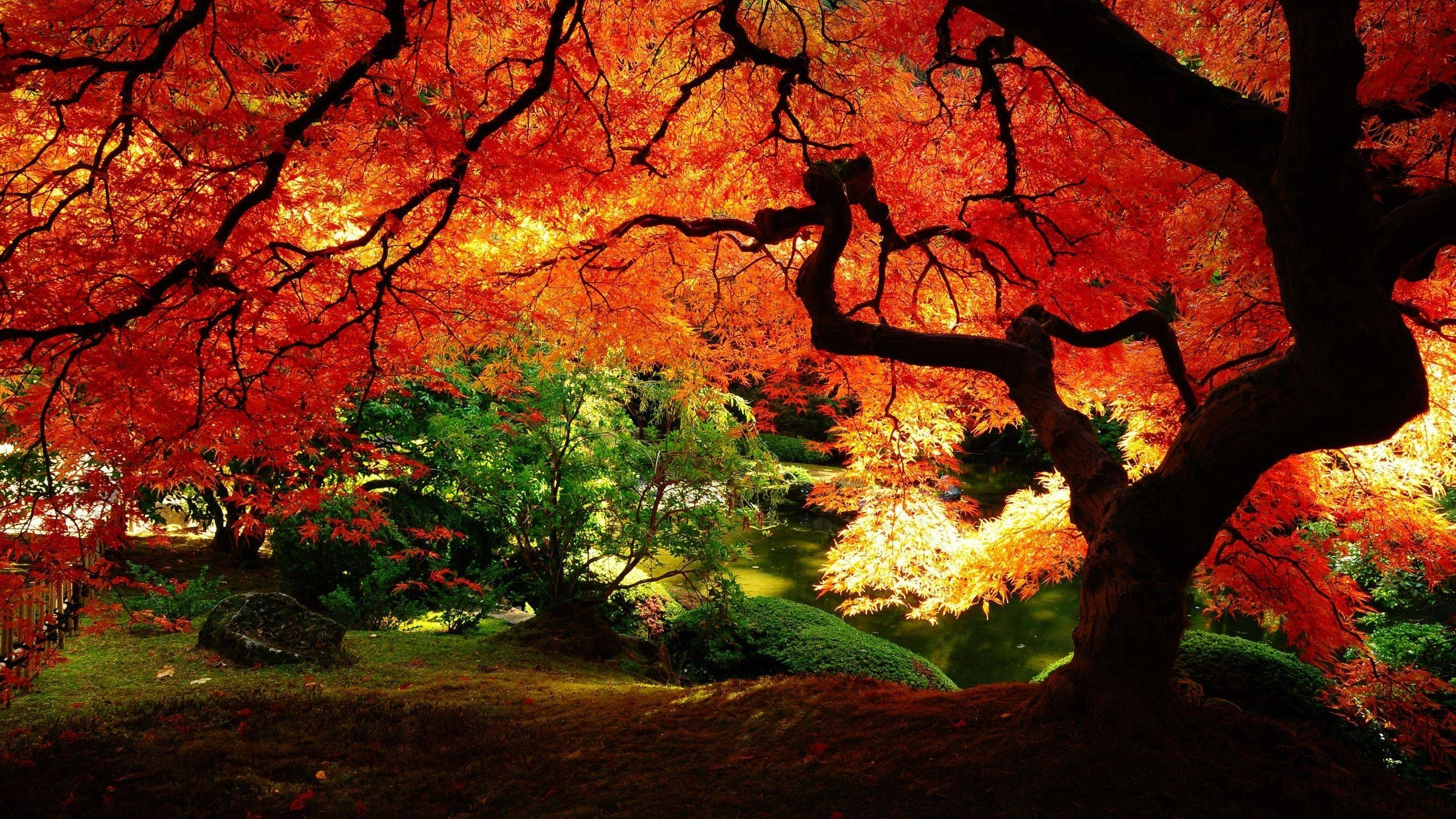 beautiful autumn wallpapers - wallpaper cave