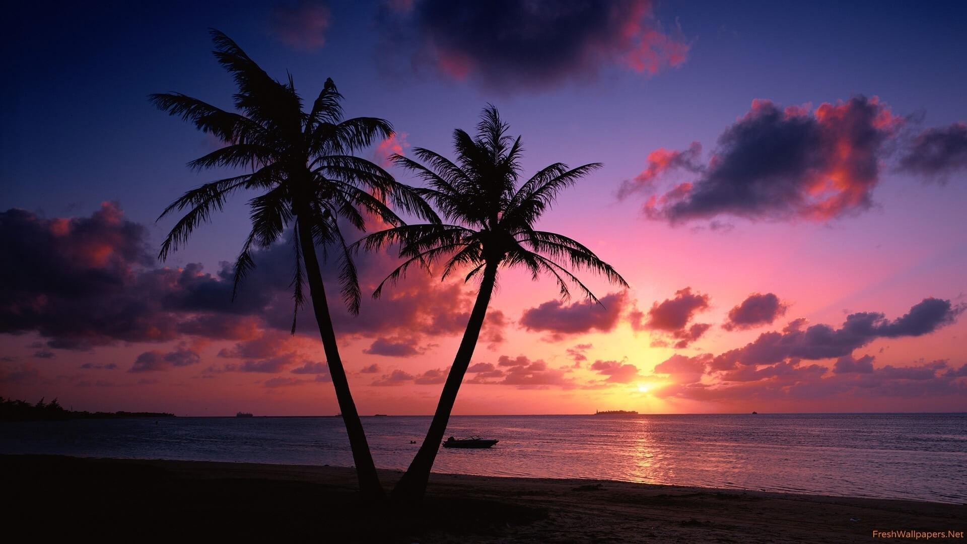 beautiful beach palm tree sunset wallpaper   the most beautiful