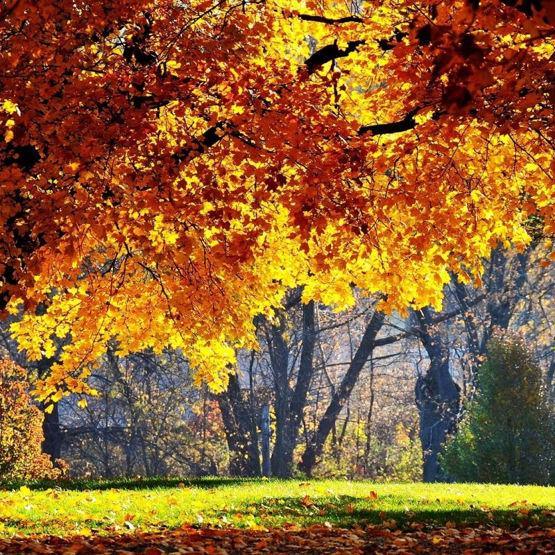 10 Best Beautiful Fall Pictures Wallpaper FULL HD 1080p For PC Desktop 2020 free download beautiful fall e29da4 4k hd desktop wallpaper for 4k ultra hd tv e280a2 wide 800x800