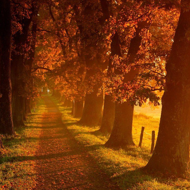 10 Best Beautiful Fall Scenery Images FULL HD 1080p For PC Desktop 2018 free download beautiful fall scenery 18761 2560x1600 px hdwallsource 800x800
