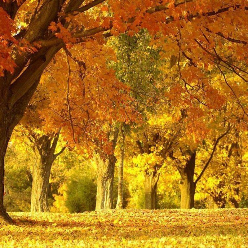 10 Best Beautiful Fall Scenery Images FULL HD 1080p For PC Desktop 2018 free download beautiful fall scenery beautiful autumn scenery fall 800x800