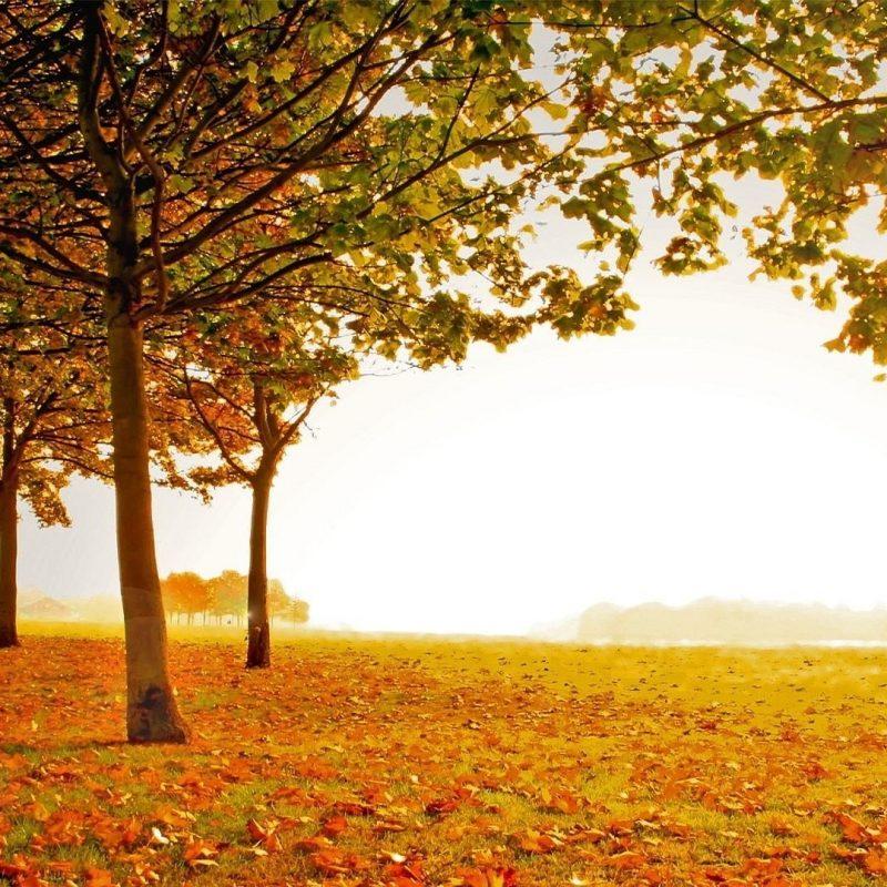 10 Best Beautiful Fall Scenery Images FULL HD 1080p For PC Desktop 2018 free download beautiful fall scenery wallpaper 133904 800x800