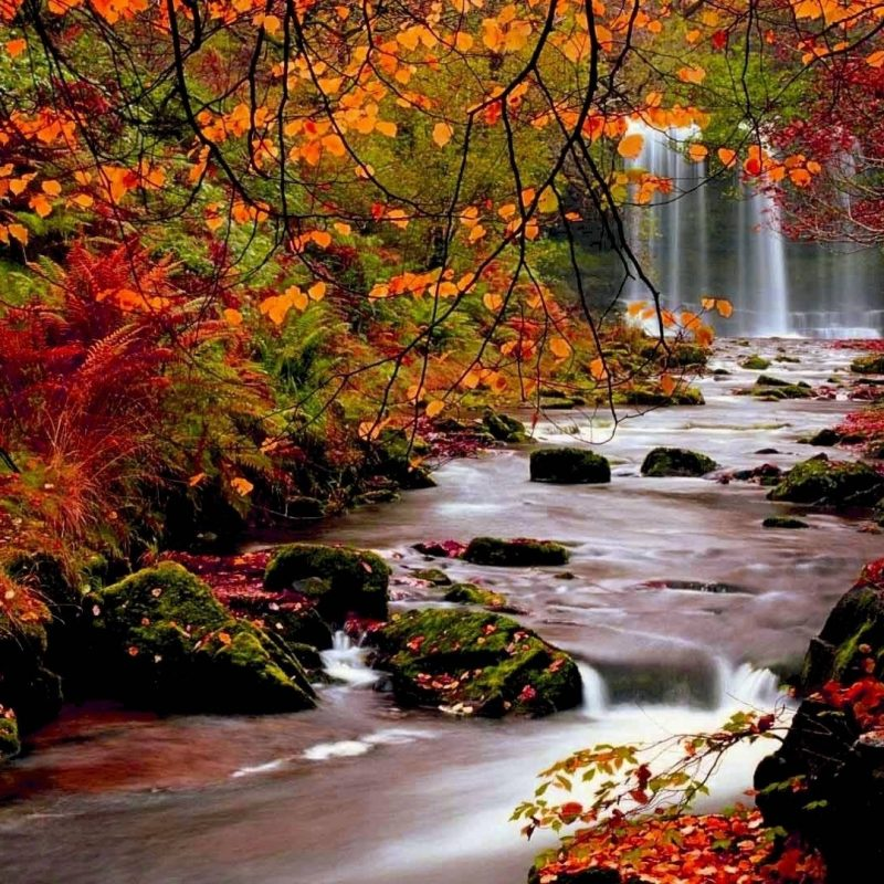 10 Top Images Of Fall Scenery FULL HD 1080p For PC Background 2018 free download beautiful fall scenery wallpaper 49 images 2 800x800