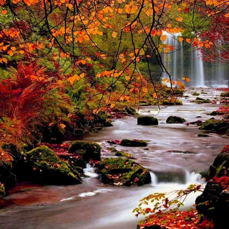 10 Best Beautiful Fall Pictures Wallpaper FULL HD 1080p For PC Desktop 2020 free download beautiful fall scenery wallpaper download hd wallpapers 1 800x800